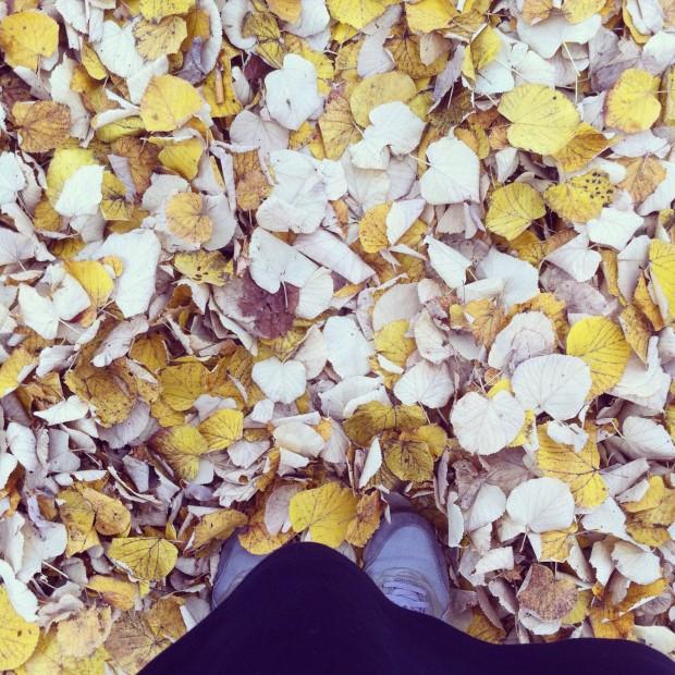 Herbst (C) Bildbunt